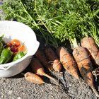 秋の収穫・ニンジン、ミニトマト、ピーマン